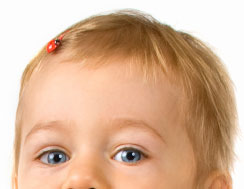 Close-up of toddler's hair